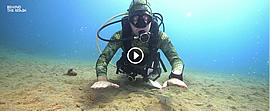 Dive to be alive - Dive Society Philippines