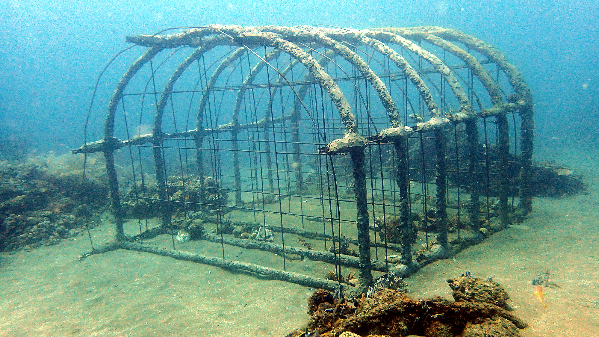 Reef Project