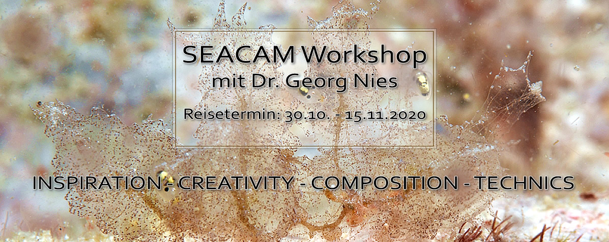 SEACAM Workshop 2020 mit Dr. Georg Nies